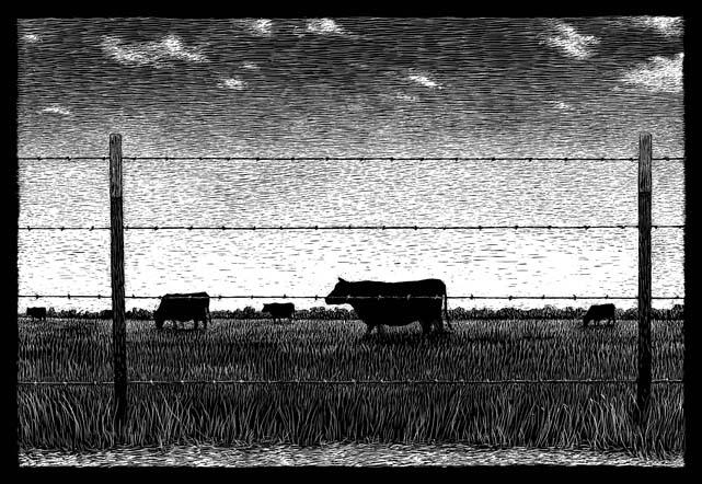 Field of cows carte à gratter - 22 x 15 cm Réf. : ott046